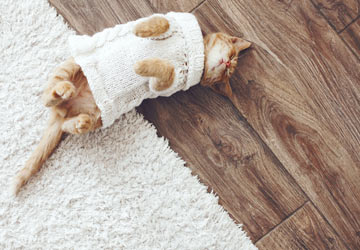 How to pick the purr-fect flooring when you have a pet