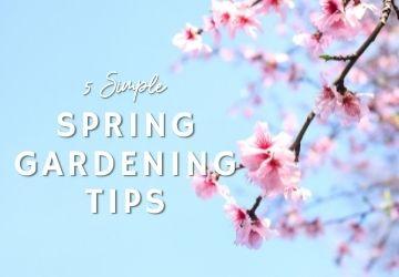 5 Simple Spring Gardening Tips